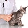 Ветеринарные клиники в Мордово